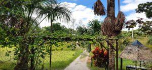 Caya Shobo Ayahuasca Healing Retreat Centre, Iquitos, Peru
