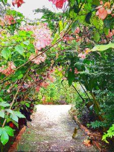 Flower path, Caya Shobo