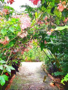 Flower paths, Caya Shobo