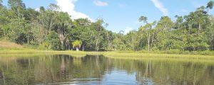 Lagoon at Caya Shobo Ayahuasca Healing Retreat Centre, Iquitos, Peru