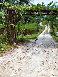 Sandy Paths, Caya Shobo
