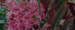 Flower gardens, Caya Shobo