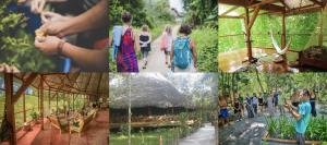 Caya Shobo Plant Dieta & Ayahuasca Retreats