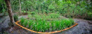 Medicine Plant Gardens Caya Shobo