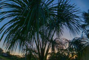 Palms at Caya Shobo Retreat Center