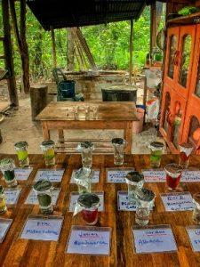 Plant Dieta Teas Caya Shobo Ayahuasca Retreat Center