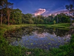Ponds at Caya Shobo Retreat Center