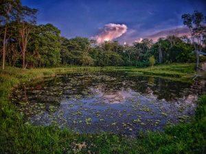 Ponds Caya Shobo Ayahuasca Retreat Center