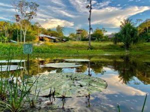Victoria Regia Pond Caya Shobo