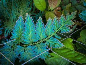Plant at Caya Shobo