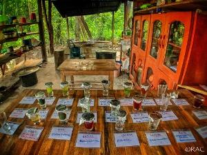 Plant Dieta Teas at Caya Shobo Medicine House